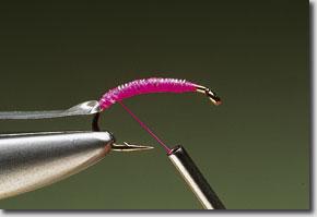 pink-shrimp-pic-5.jpg