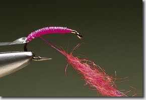 pink-shrimp-pic-6.jpg