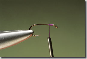 snipe-1.jpg