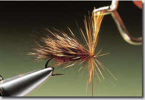 sedge-hog-10.jpg
