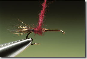 sedge-hog-5.jpg