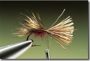 sedge-hog-6.jpg