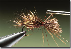 sedge-hog-8.jpg