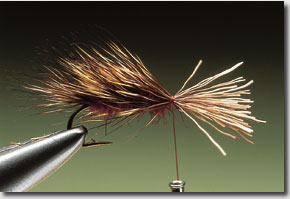 sedge-hog-9.jpg