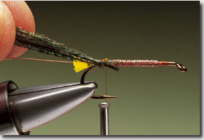 Stickfly-pic-6.jpg