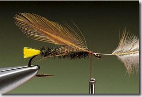 Stickfly-pic-9.jpg