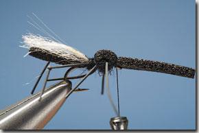 hawthorn_fly-10-1.jpg
