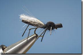 hawthorn_fly-12-1.jpg