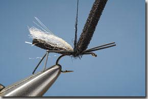 hawthorn_fly-7-1.jpg