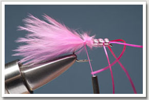 pink_worm-6.jpg
