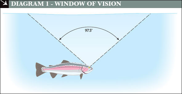 how to present your fly so the trout can see and take it easilybear in mind, too, that fish are usually looking forward and concentrating on the front half of the window in the direction they\u0027re moving