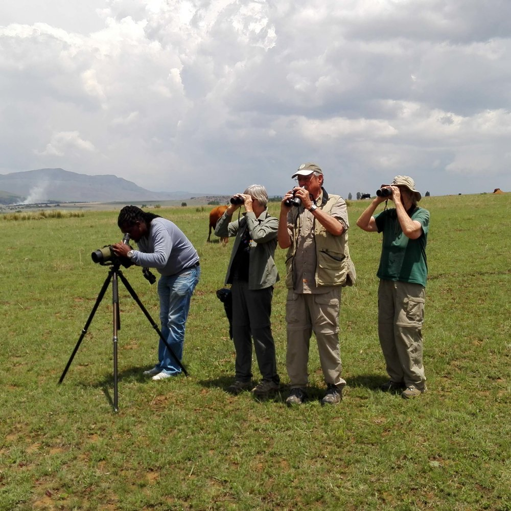 Birding in Wakkerstroom