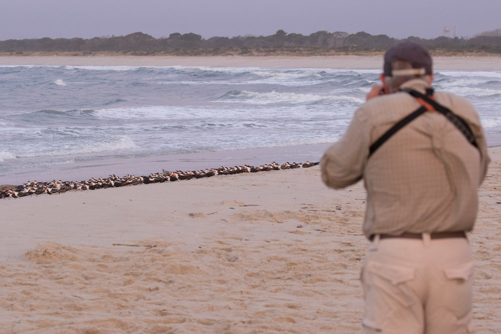 Photographing skimmers