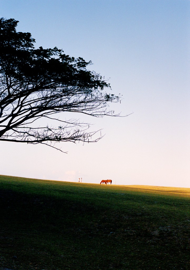 Two Horses, 2009