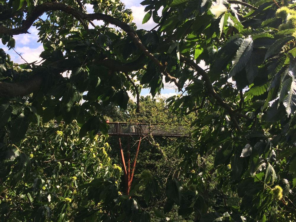 Kew-Gardens-Go-Jauntly-Tree-Walk.jpg