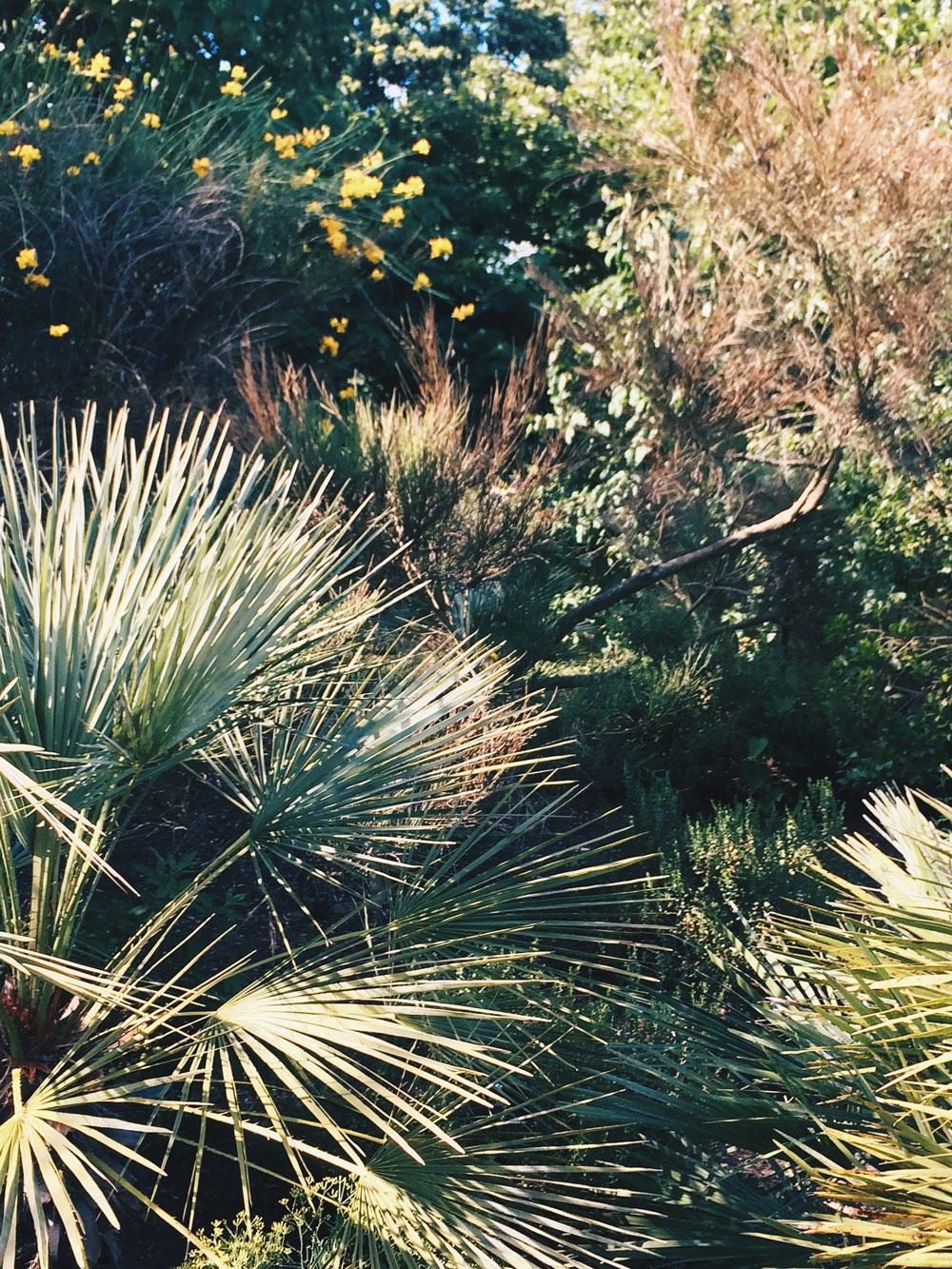 Kew-gardens-Walk-Go-Jauntly-London-Palmtrees