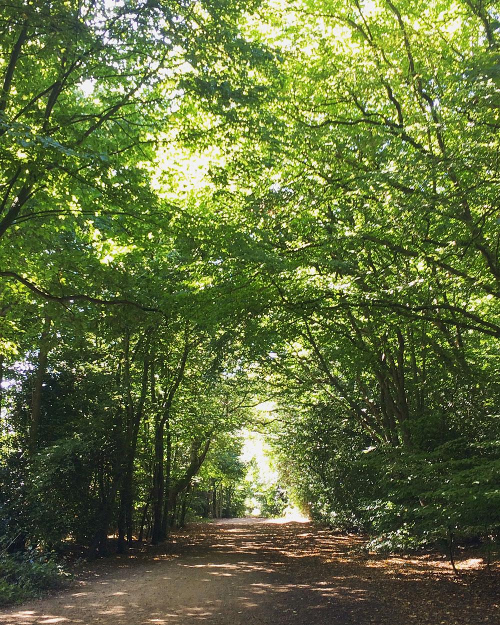 Walking-Epping-Forest-Go-Jauntly-London