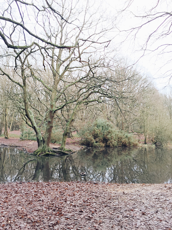 Go-jauntly-hampstead-heath-woods-london-walking-forest