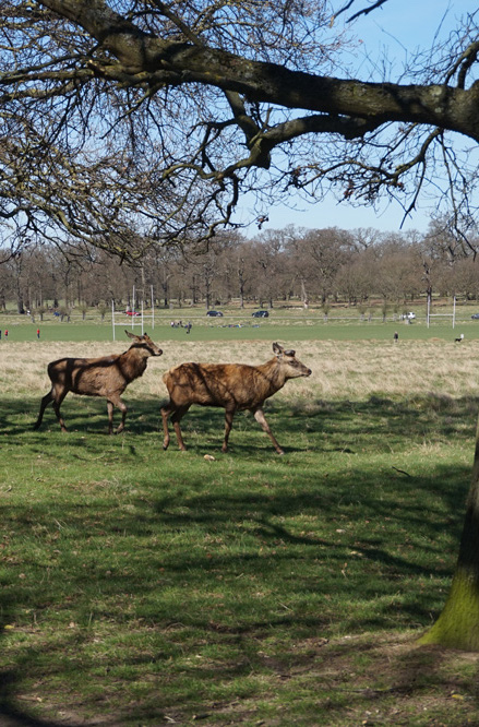 Go-jauntly-richmond-park-deer-forest-explore-london.jpg