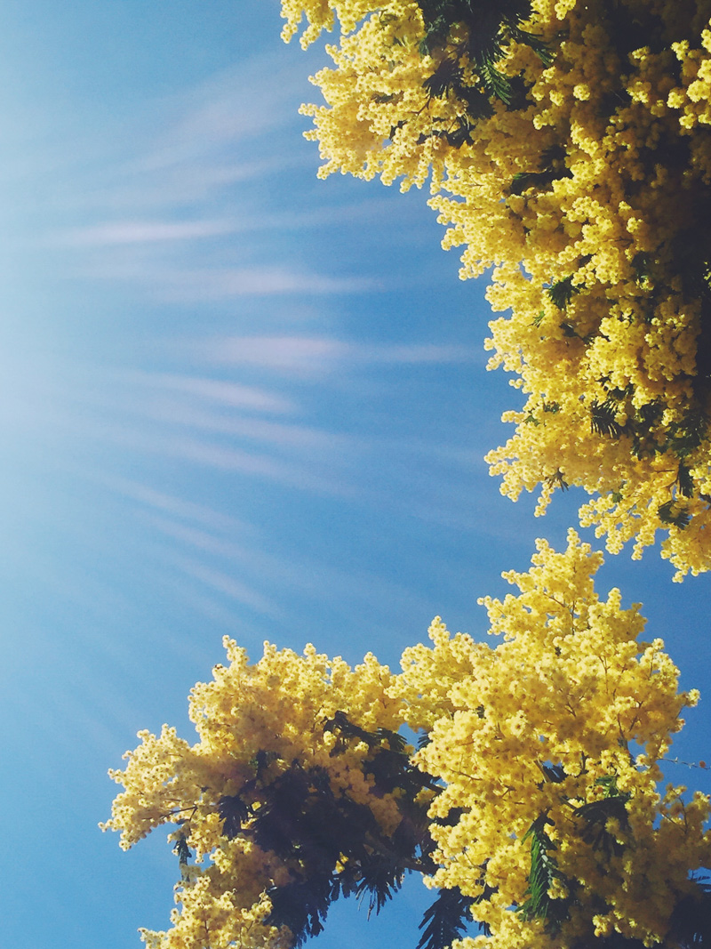 Go-jauntly-blue-sky-yellow-flower-app-nature.jpg