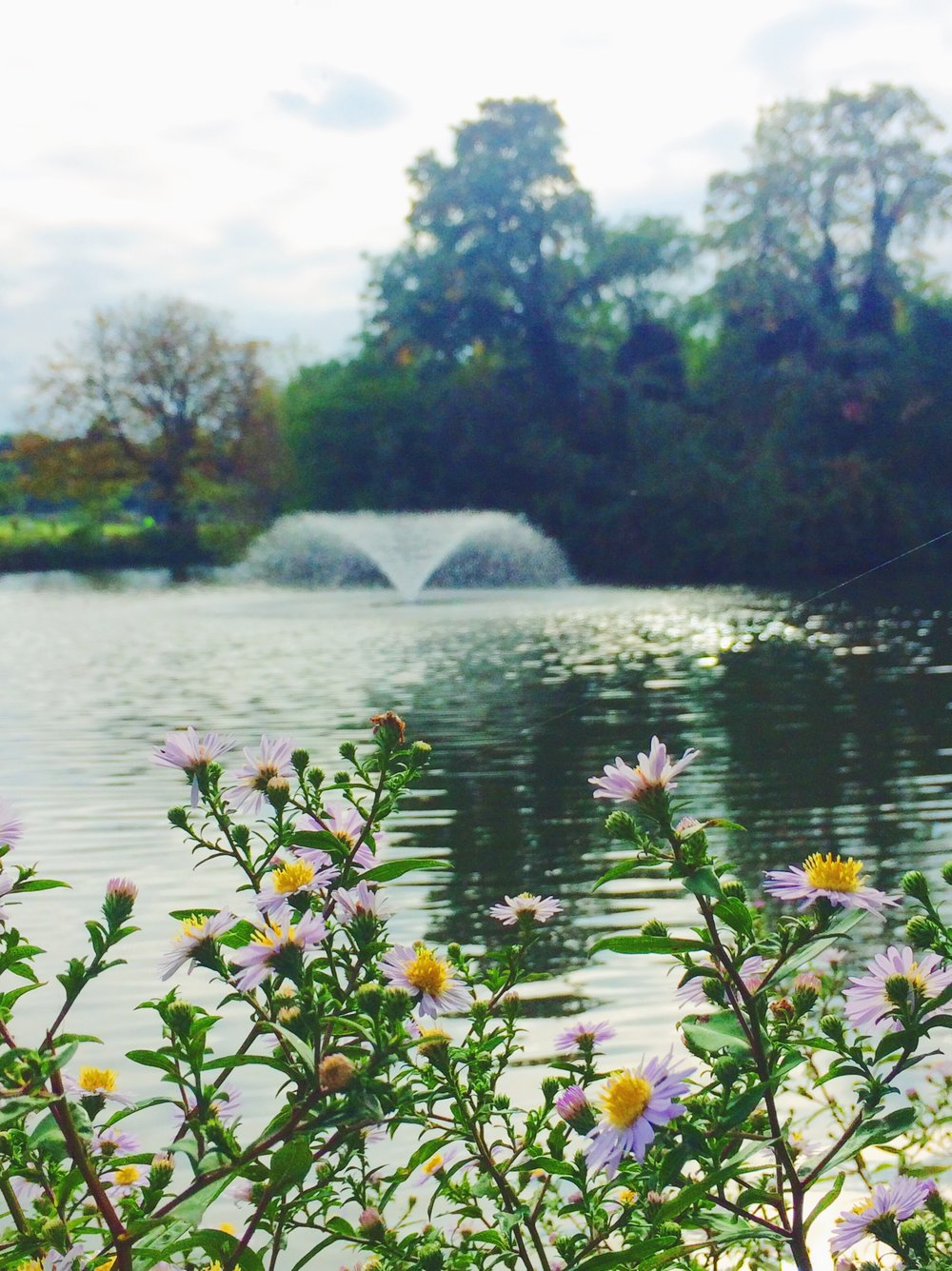 clissold-park-flowers-and-lake