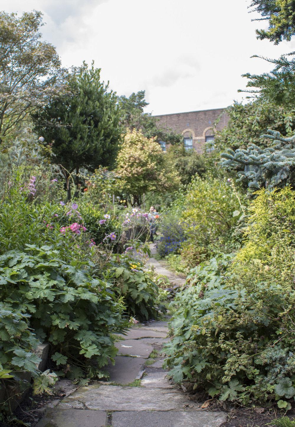 The beautiful Culpeper Community Garden
