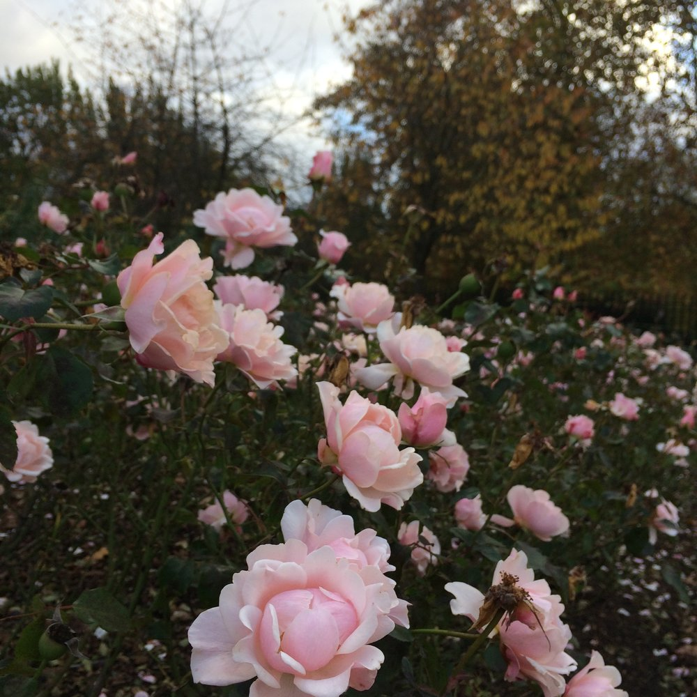 Best Parks in London - Beautiful gardens, great views and wonderful cafes - Explore now.