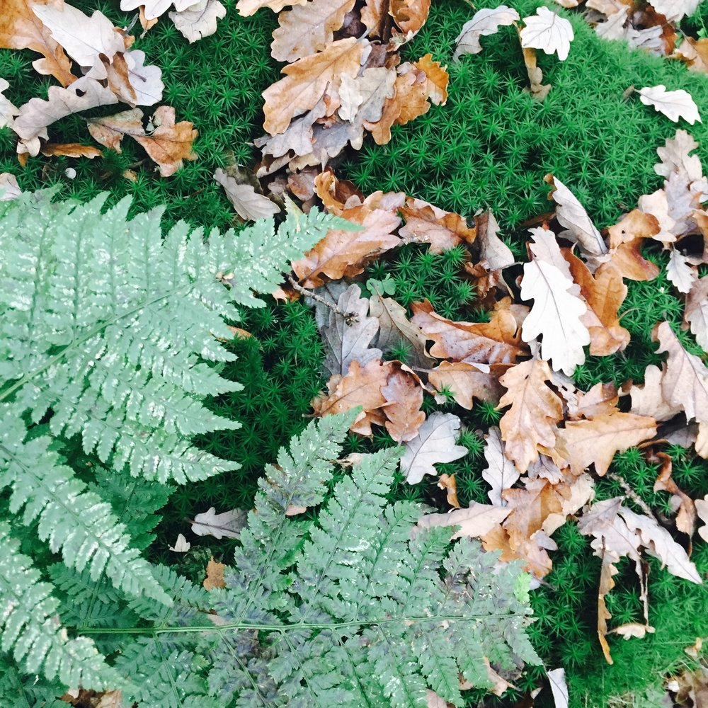 Woodland Wanders - Check out some of Sheffield's wooded areas perfect for a jaunt.