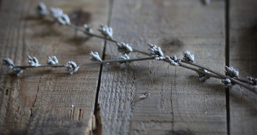 Winter | Linden & Lavender