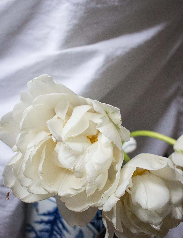 Ivory tulips | Linden & Lavender