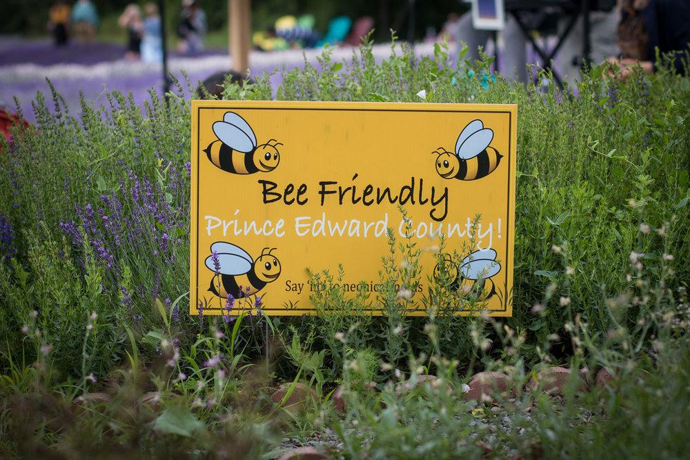 Lavender festival, Prince Edward County