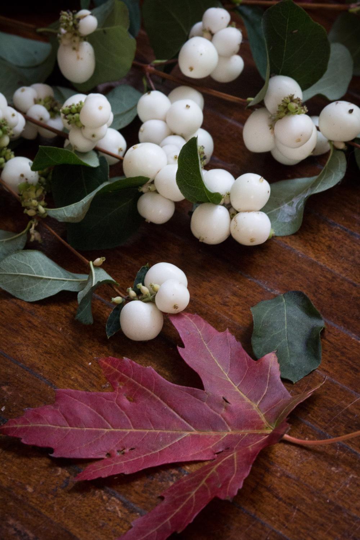 autumn | Linden & Lavender