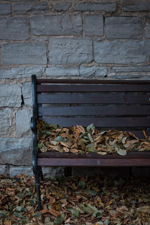 Abandoned for the season | Linden & Lavender