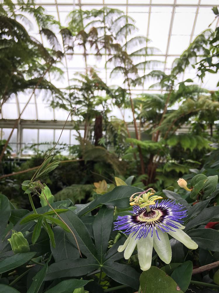 enid haupt conservatory | Linden & Lavender