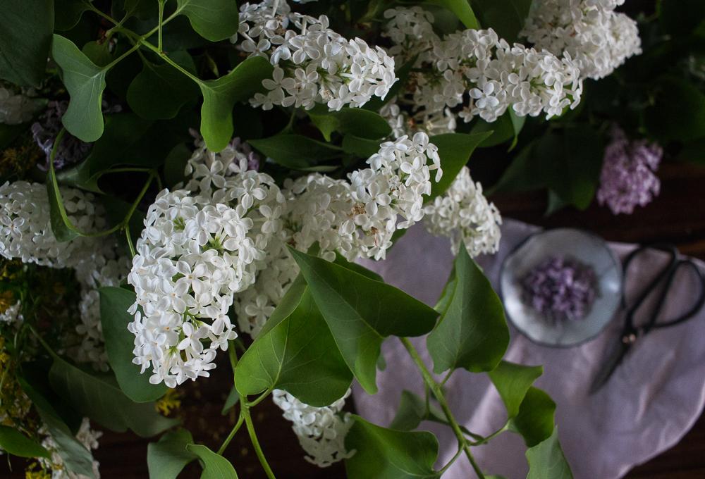 Lilacs | Linden & Lavender