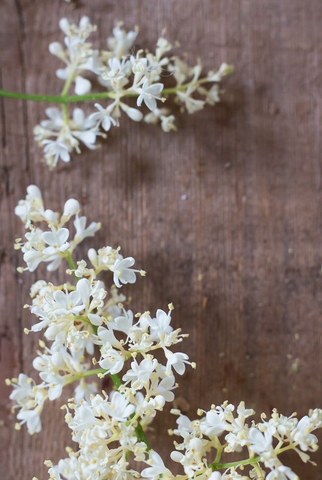 White Flowering Lilac Branch
