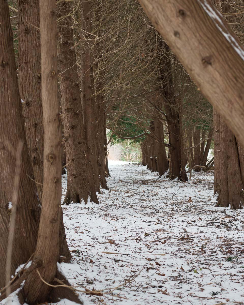 Winter Walk | Linden & Lavender