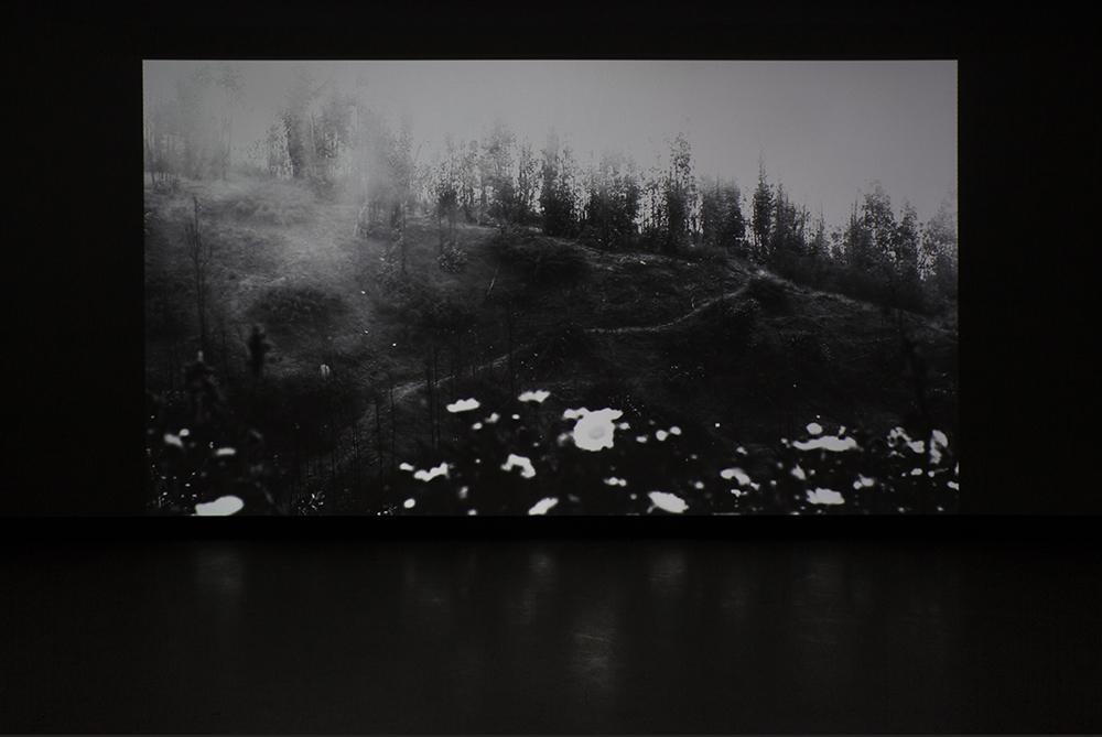 © Gabriela Golder, Tierra Quemada(2015). Vue de l'exposition. Photo : Marilou Crispin.