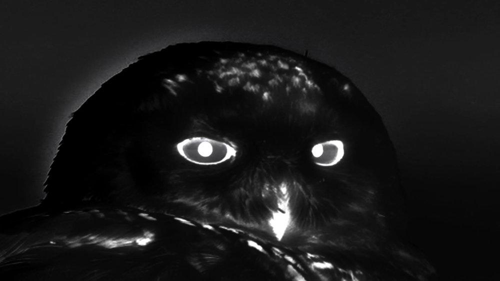 © Michaela Grill, carte noire (2014). Image tirée de la vidéo.