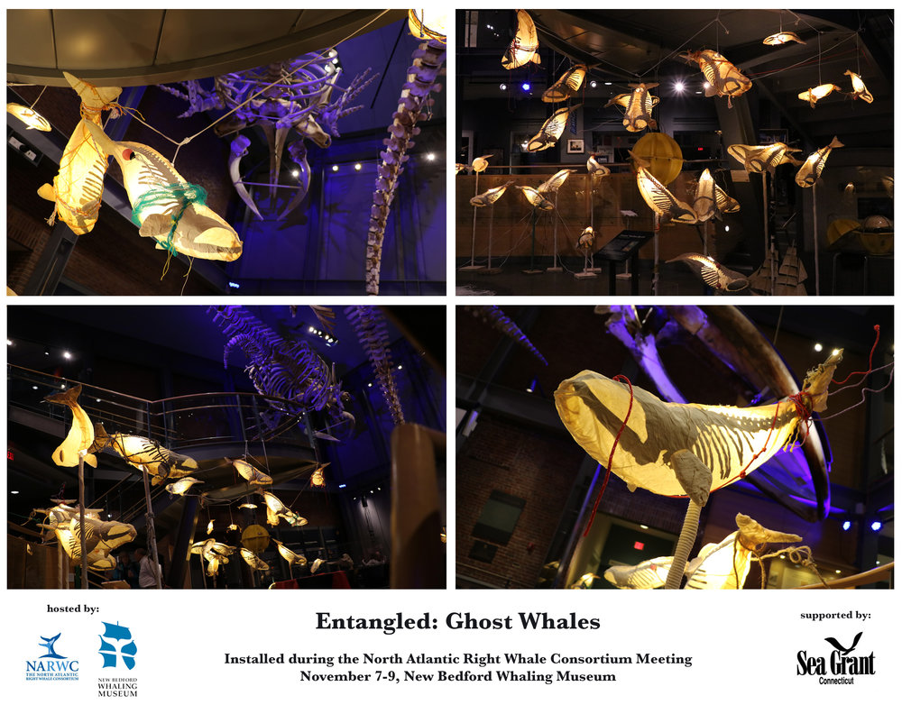 Entangled: Ghost Whales