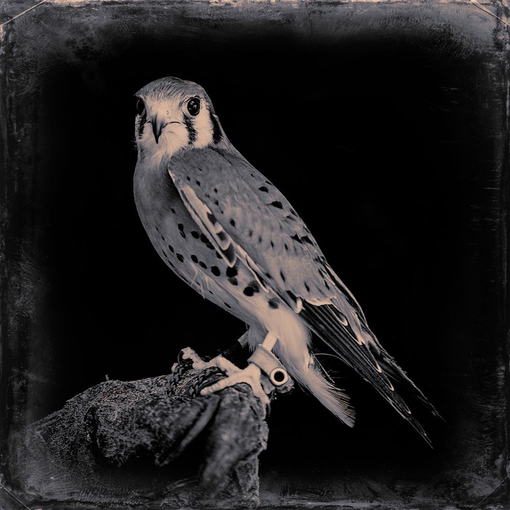 ravensbeard-139hawk1.jpg