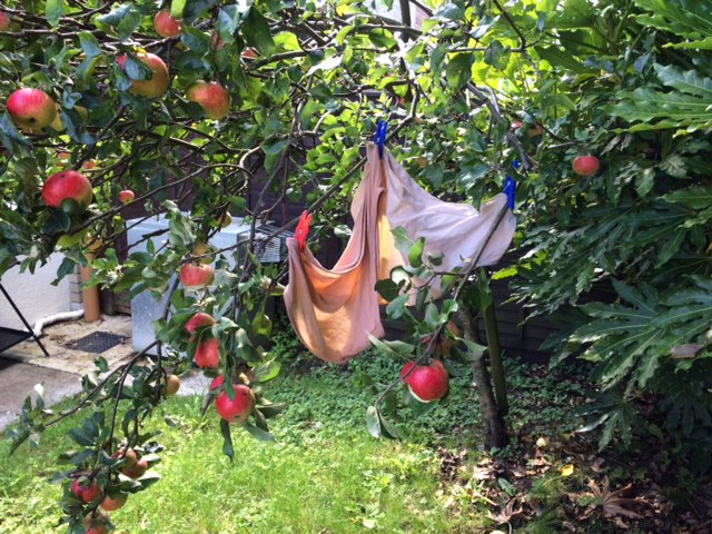 undies in the apple tree.JPG