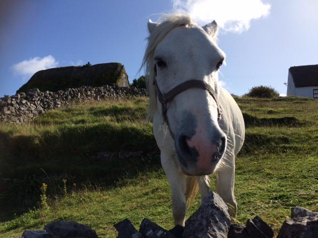 inishmore horse.JPG