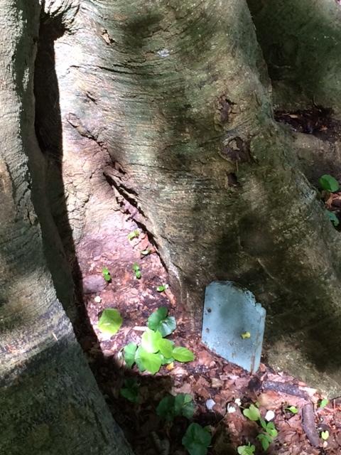 Dangan fairies are everywhere.