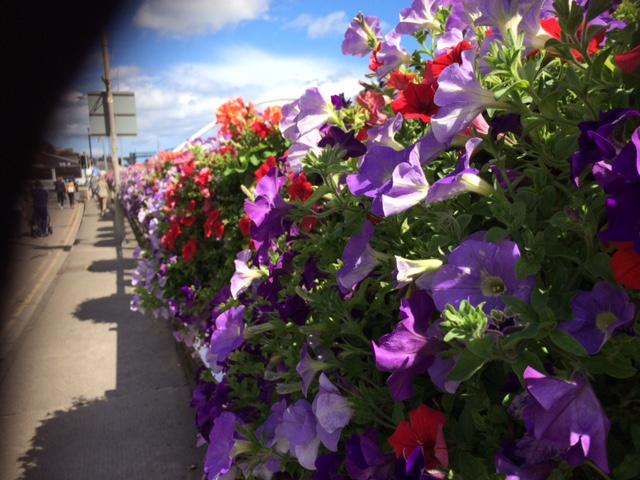 drogheda flowers.JPG