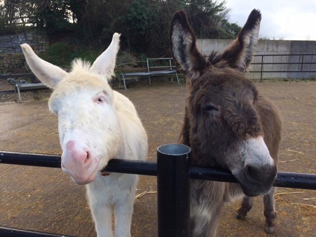 two donkeys.JPG