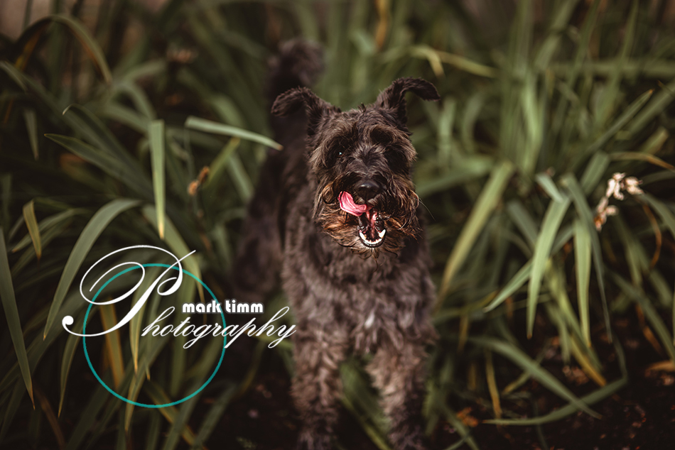 pet photographer scotland