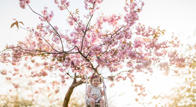 blossom pano 1.jpg