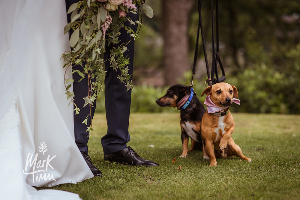 dogs at scottish wedding