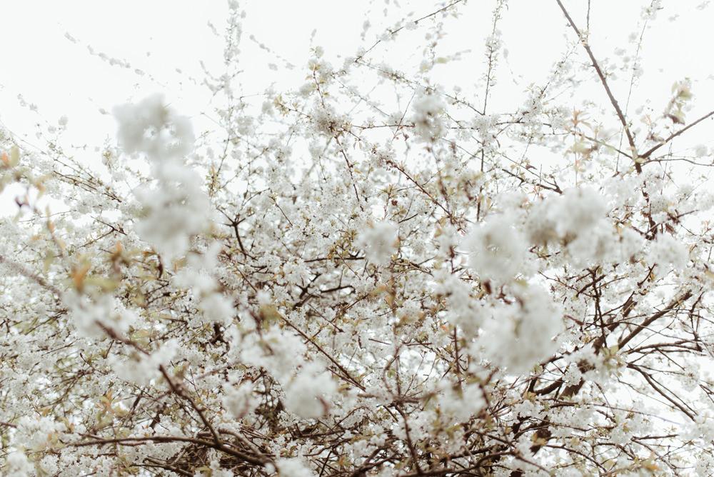 blossom-wedding-scotland-glasgow.jpg